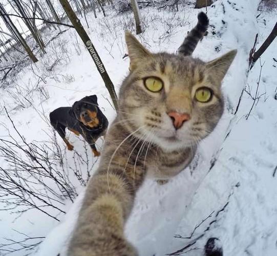 Bat cuoi anh che meo con tu suong voi selfie-Hinh-10
