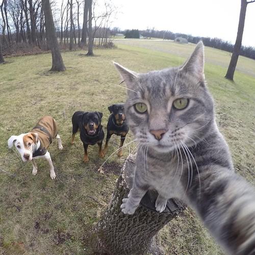 Bat cuoi anh che meo con tu suong voi selfie-Hinh-2