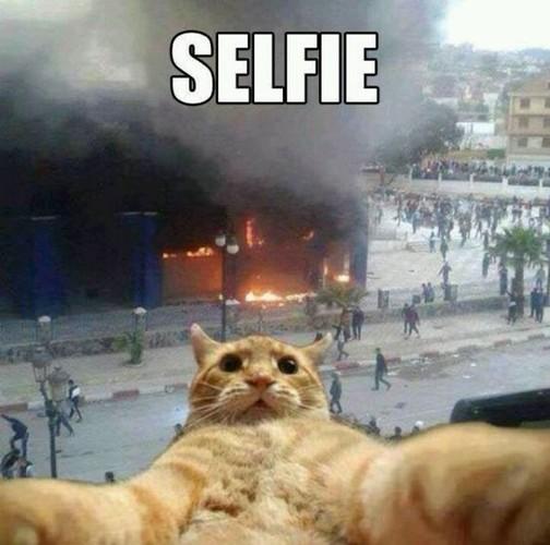 Bat cuoi anh che meo con tu suong voi selfie-Hinh-4