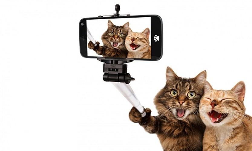 Bat cuoi anh che meo con tu suong voi selfie
