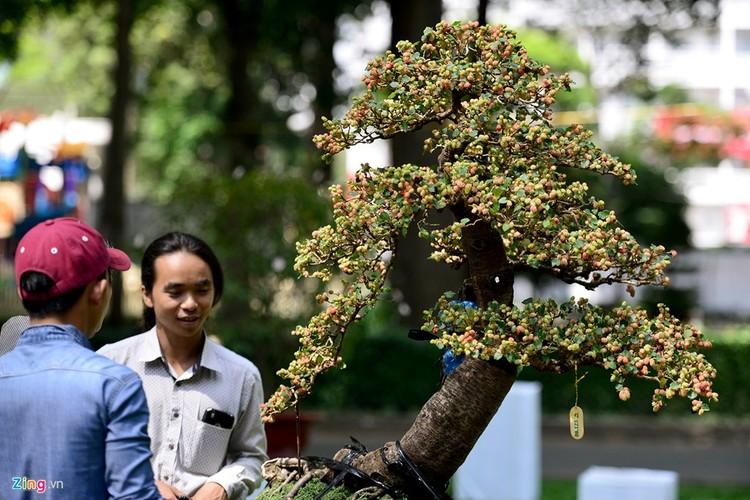 Anh: Ky hoa di thao do ve hoi hoa xuan lon nhat Sai Gon-Hinh-12
