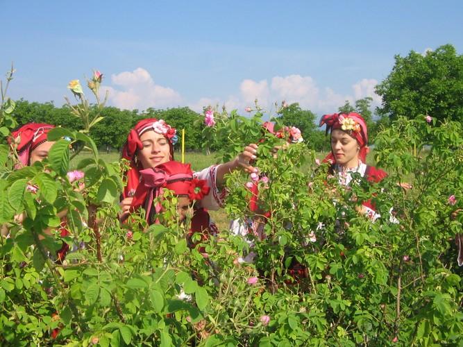 Me man ngam nhung vuon hoa hong rong lon o Bulgaria-Hinh-10
