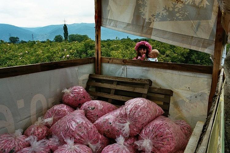 Me man ngam nhung vuon hoa hong rong lon o Bulgaria-Hinh-11