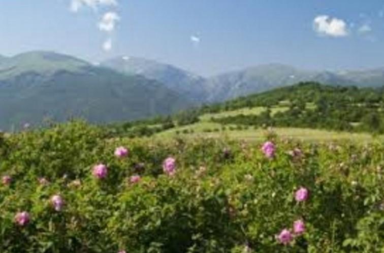 Me man ngam nhung vuon hoa hong rong lon o Bulgaria-Hinh-2