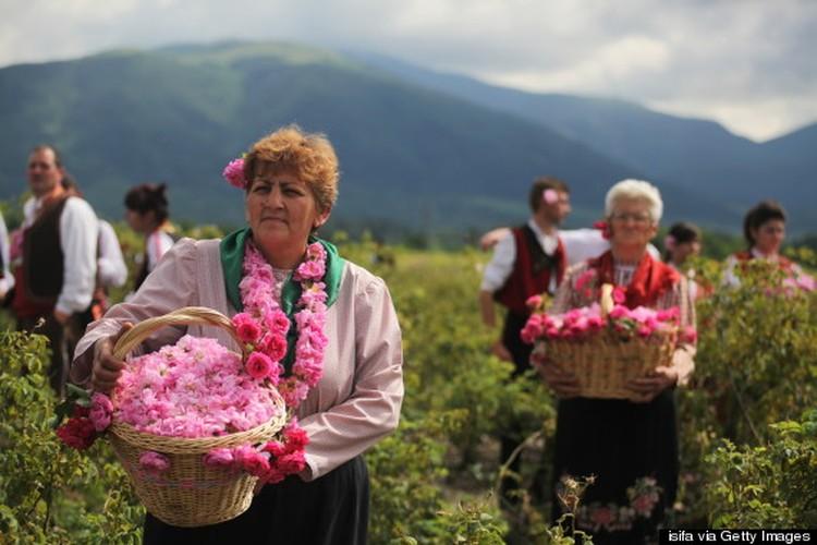Me man ngam nhung vuon hoa hong rong lon o Bulgaria-Hinh-8