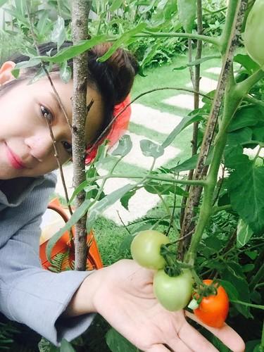 Moi mat ngam vuon rau khung cua vo chong Ly Hai - Minh Ha-Hinh-9