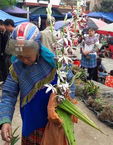 Ngam khu ban hoa lan doc dao o cho phien Bac Ha-Hinh-10