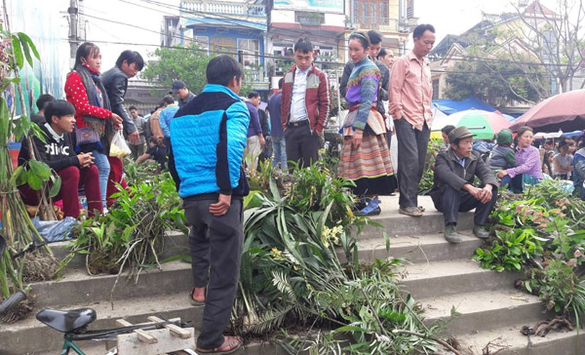 Ngam khu ban hoa lan doc dao o cho phien Bac Ha-Hinh-11