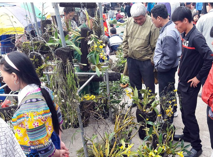 Ngam khu ban hoa lan doc dao o cho phien Bac Ha-Hinh-12