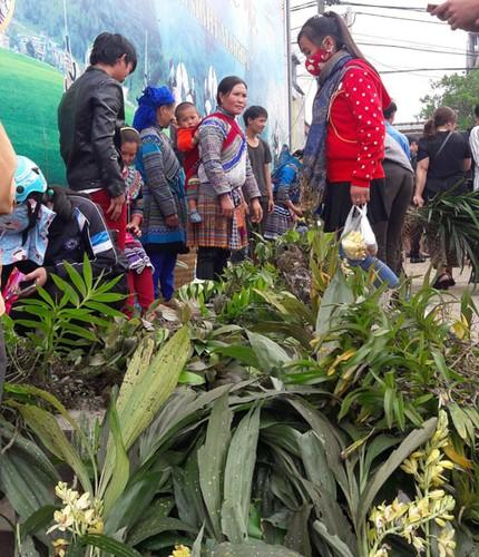 Ngam khu ban hoa lan doc dao o cho phien Bac Ha-Hinh-2