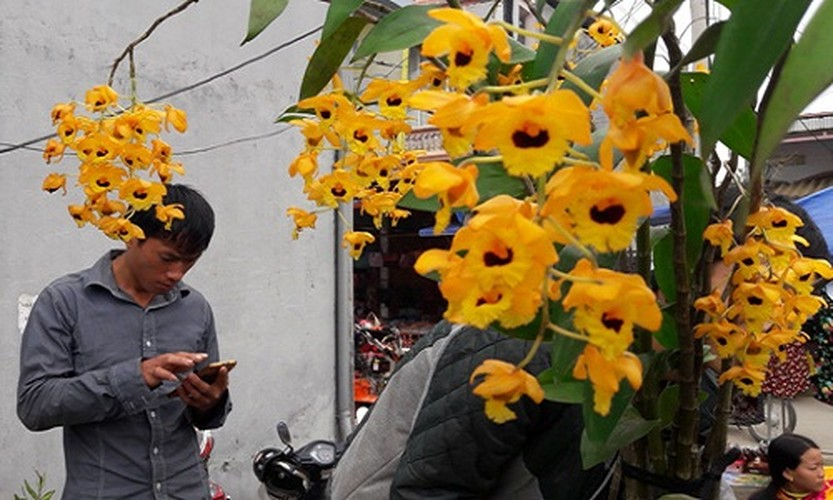 Ngam khu ban hoa lan doc dao o cho phien Bac Ha-Hinh-5