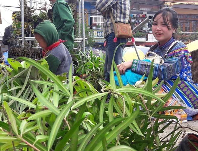 Ngam khu ban hoa lan doc dao o cho phien Bac Ha-Hinh-7