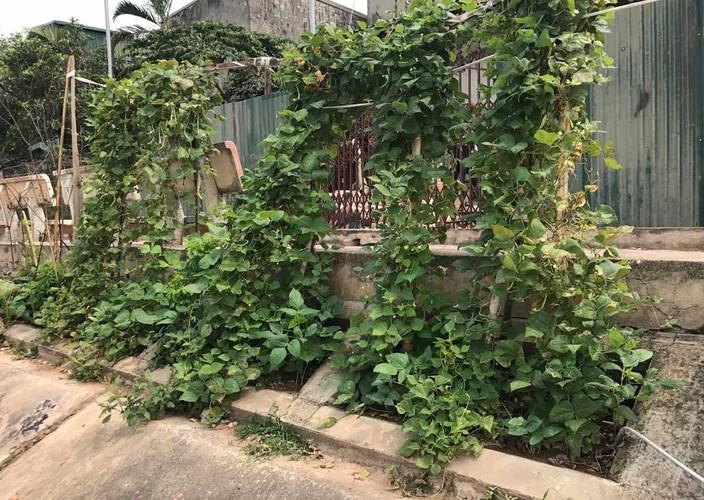 Khoet lo be tong trong rau: Ha thanh sanh cung Ha Giang-Hinh-11