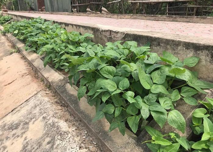 Khoet lo be tong trong rau: Ha thanh sanh cung Ha Giang-Hinh-15