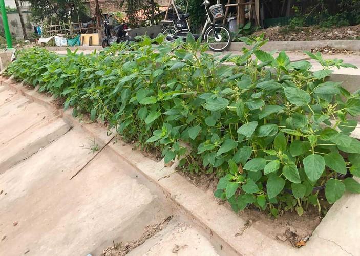 Khoet lo be tong trong rau: Ha thanh sanh cung Ha Giang-Hinh-2