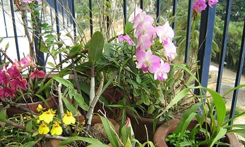 Ngam nhung ban cong day hoa phong lan cuc dep-Hinh-4