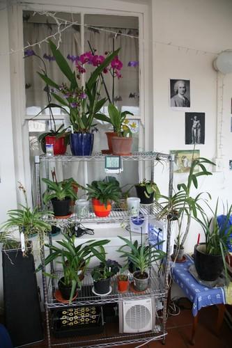 Ngam nhung ban cong day hoa phong lan cuc dep-Hinh-7