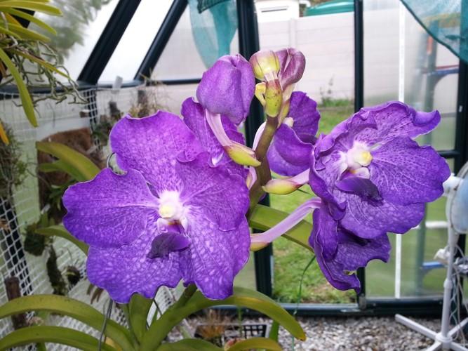 Ngam nhung ban cong day hoa phong lan cuc dep-Hinh-9