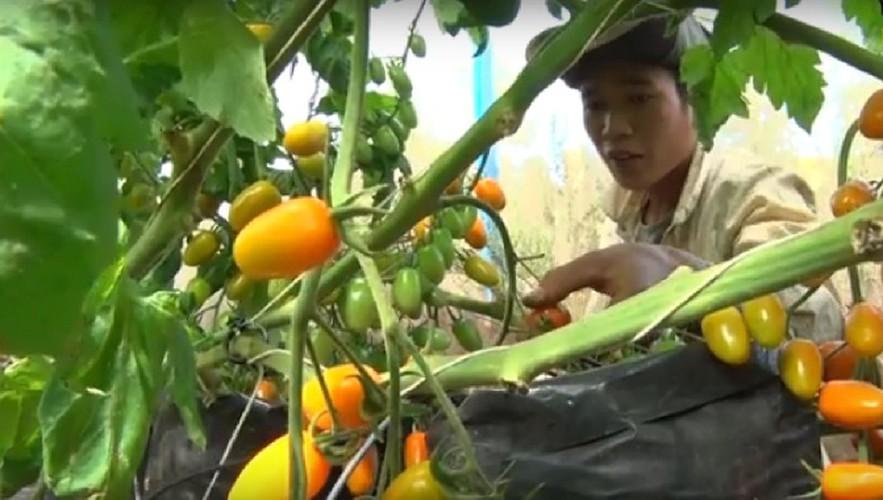 """""""Lac troi"""" giua vuon ca chua sach sieu trai o Viet Nam-Hinh-6"""