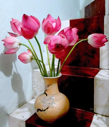 Hoc cach giup nha tro nen bung sang trong mua hoa sen-Hinh-3