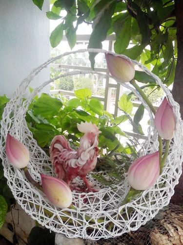 Hoc cach giup nha tro nen bung sang trong mua hoa sen-Hinh-6