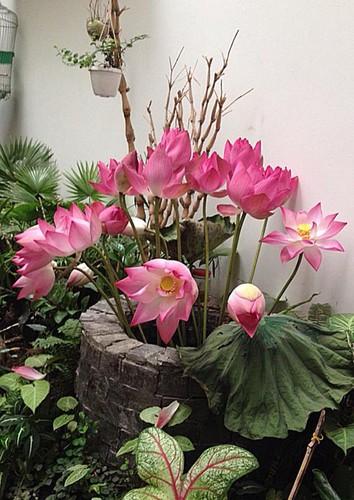 Hoc cach giup nha tro nen bung sang trong mua hoa sen-Hinh-8
