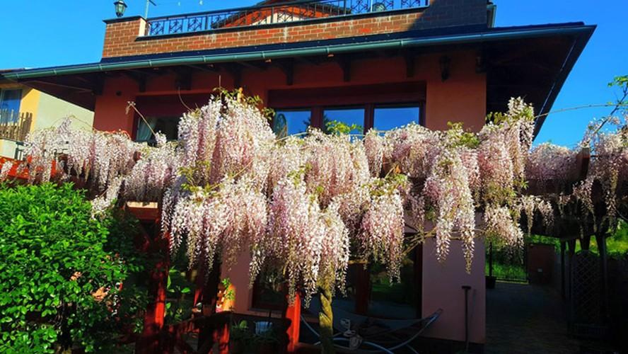 Vuon hoa dep nhu co tich cua phu nu Viet o Praha-Hinh-10