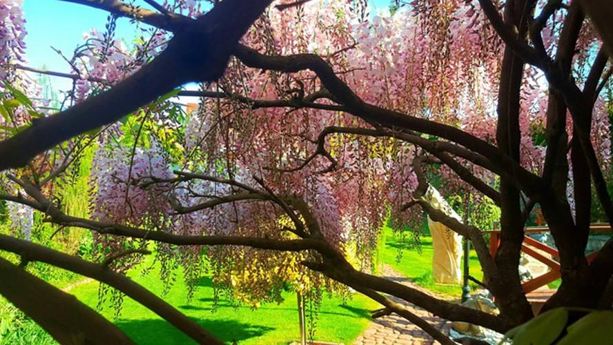 Vuon hoa dep nhu co tich cua phu nu Viet o Praha-Hinh-12