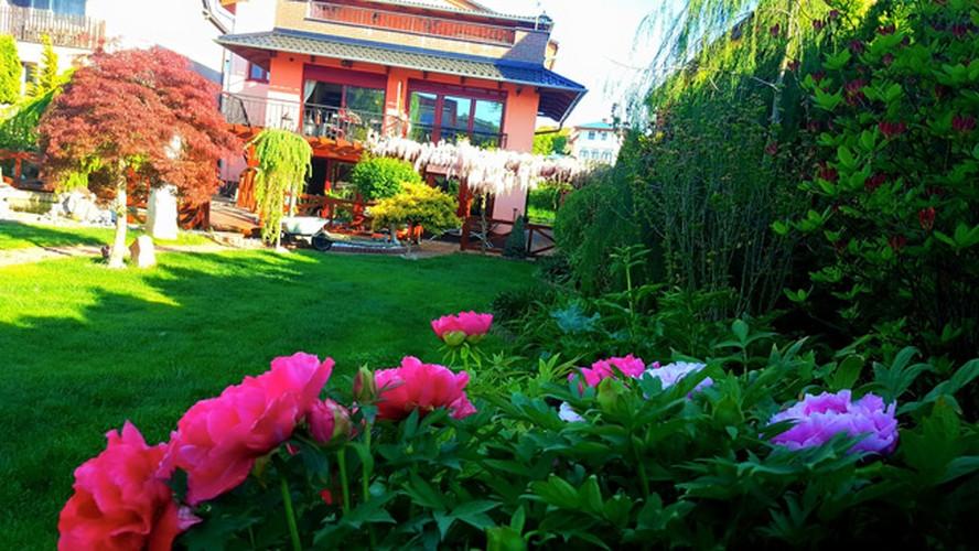 Vuon hoa dep nhu co tich cua phu nu Viet o Praha-Hinh-5