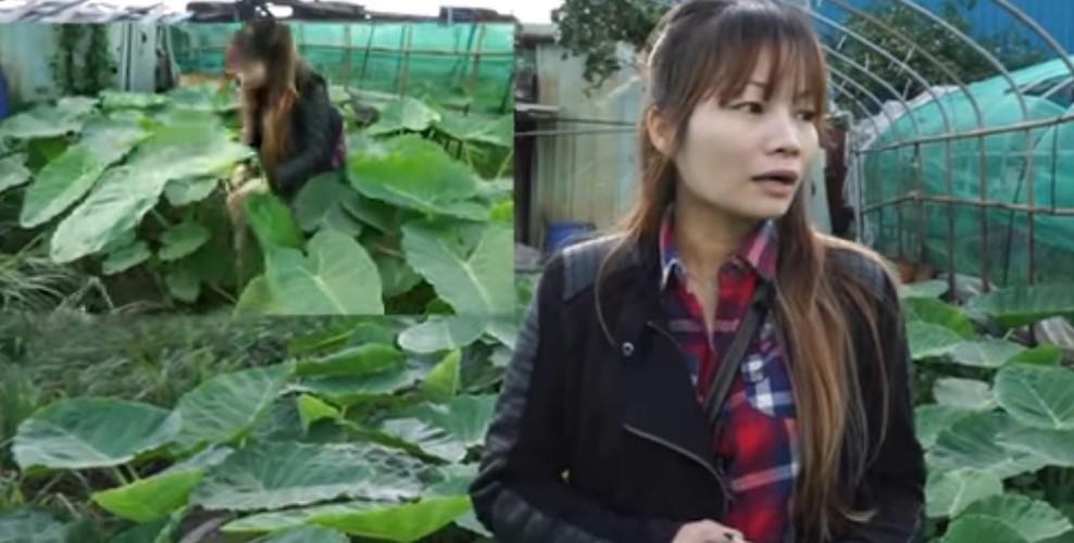 Me tit nhung vuon rau sach cua me Viet tai Dai Loan-Hinh-12