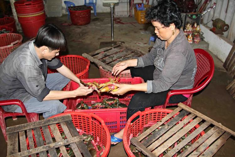 Tan muc cua bien Tra Vinh khong lo 350.000 dong/kg-Hinh-7