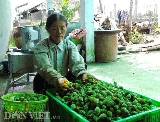 """Muot mat ngam 10ha kho qua rung """"sach"""" giua dong bang-Hinh-6"""