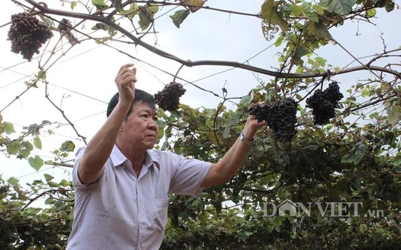"Khach nuom nuop den vuon nho rung cua lao nong ""khung"" Tay Ninh-Hinh-3"