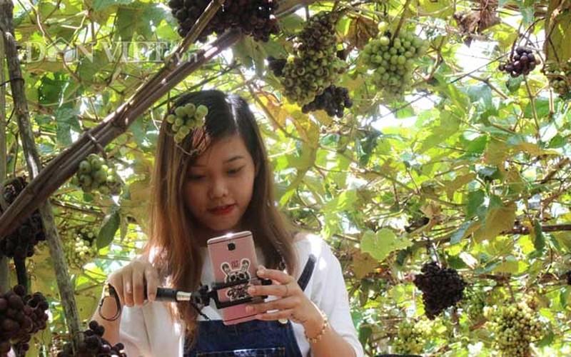 "Khach nuom nuop den vuon nho rung cua lao nong ""khung"" Tay Ninh-Hinh-6"