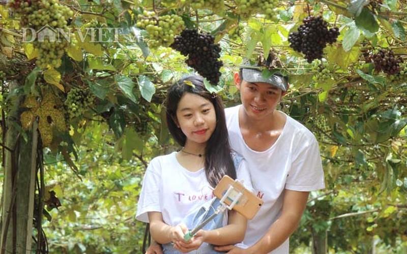 "Khach nuom nuop den vuon nho rung cua lao nong ""khung"" Tay Ninh-Hinh-7"