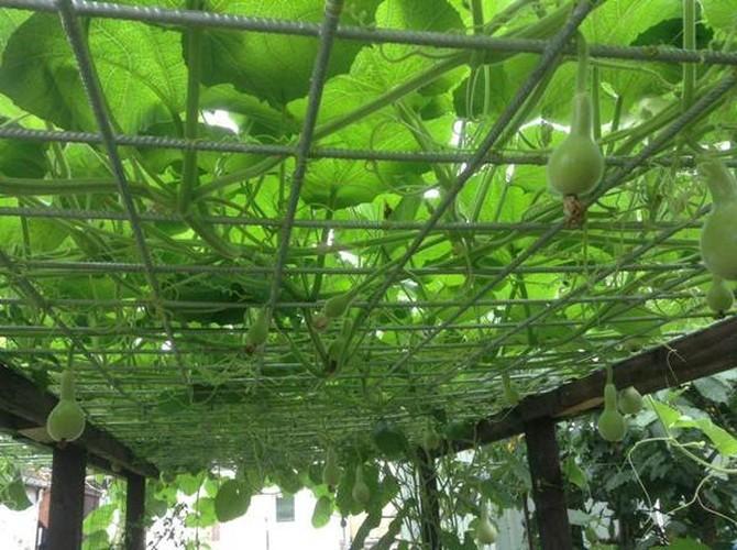 Muot mat ngam nhung vuon rau Viet o Duc-Hinh-16