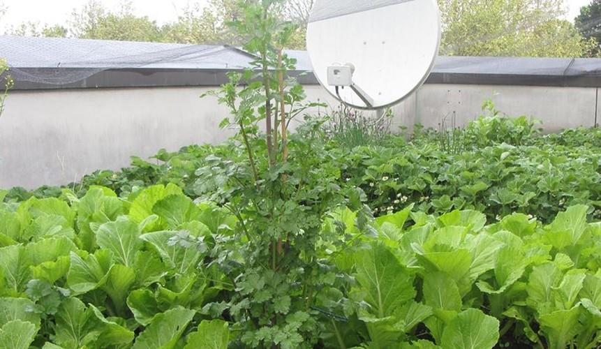 Muot mat ngam nhung vuon rau Viet o Duc-Hinh-2