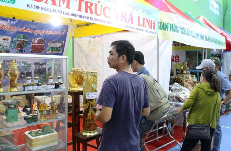 Hinh anh cho sam Ngoc Linh doc nhat o Quang Nam-Hinh-3