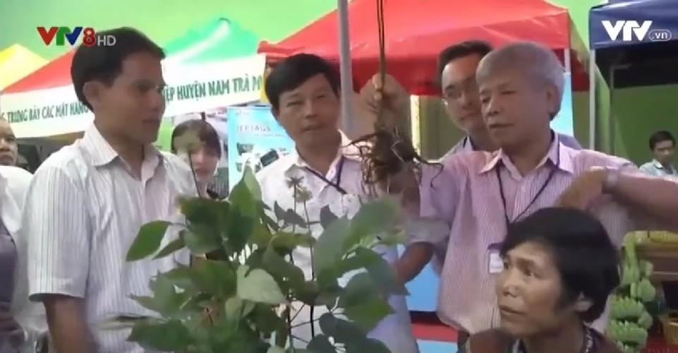 Hinh anh cho sam Ngoc Linh doc nhat o Quang Nam-Hinh-9