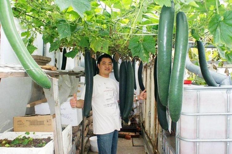 Muot mat ngam nhung vuon rau Viet dang nguong mo o Sec-Hinh-5