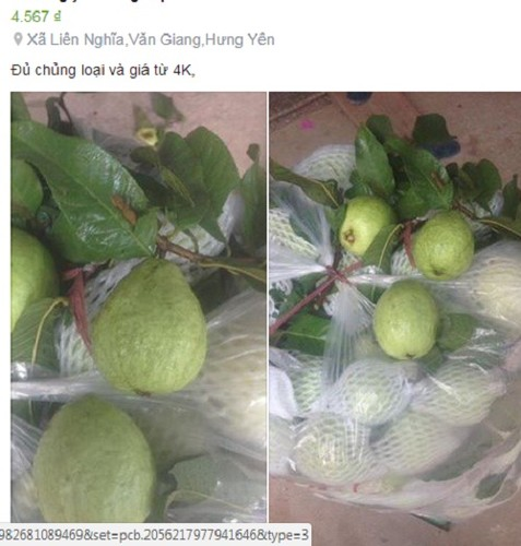"Rot gia the tham, hang loat trai cay ""keu cuu"" cho mang-Hinh-9"