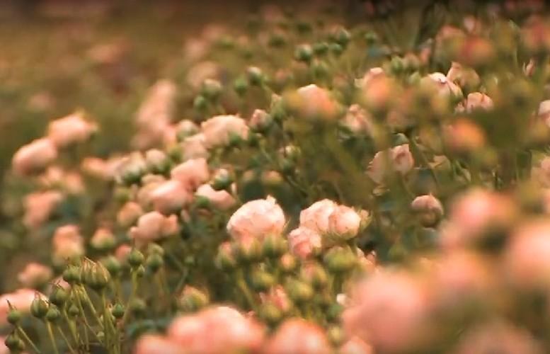 Ben trong nha kinh trieu do trong tram loai hoa quy-Hinh-17