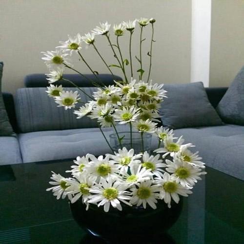 Cach trang tri nha dep tinh khoi voi cuc hoa mi-Hinh-4