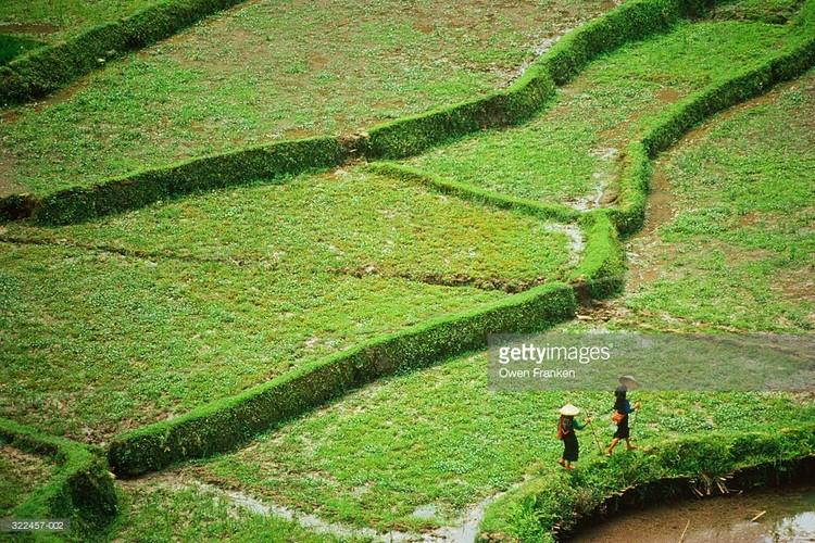 Loat anh tuyet voi ve ba mien Viet Nam dau thap nien 1990 (2)-Hinh-9