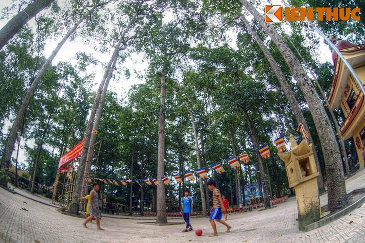 """Khu rung"" tuyet dep trong ngoi chua o Sai Gon-Hinh-6"