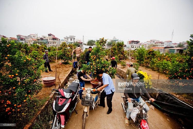 Anh than thuong ve Tet Viet trong ong kinh phong vien Tay-Hinh-10
