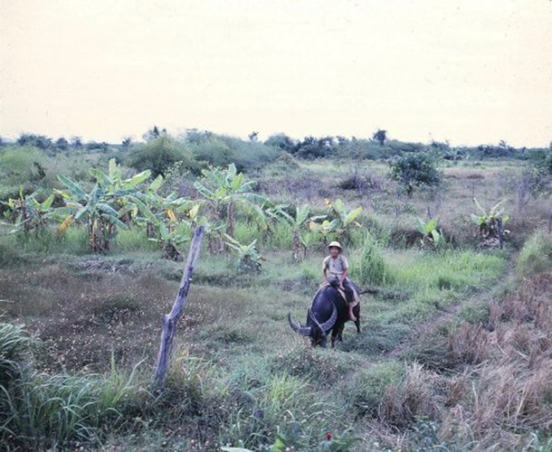 Anh doc tre em Viet Nam nam 1967 cua cuu binh My-Hinh-6