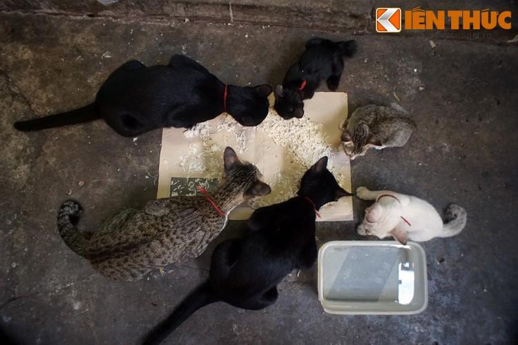 Kham pha the gioi thu vi cua loai meo o Bangkok-Hinh-11
