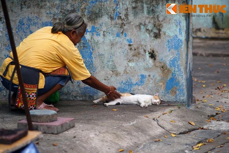 Kham pha the gioi thu vi cua loai meo o Bangkok-Hinh-17