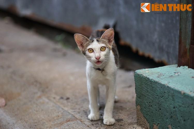 Kham pha the gioi thu vi cua loai meo o Bangkok-Hinh-18